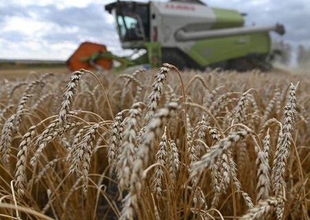 A combine harvests wheat in a field of Triticum farm in Omsk region, Russia September 16, 2020. Picture taken September 16, 2020. REUTERS/Alexey Malgavko