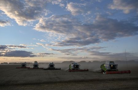 Combines harvest wheat in a field of Triticum farm in Omsk Region, Russia September 16, 2020. Picture taken September 16, 2020. REUTERS/Alexey Malgavko