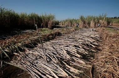Workers harvest sugar cane at a plantation in Grecia, Costa Rica January 25, 2019. REUTERS/Juan Carlos Ulate