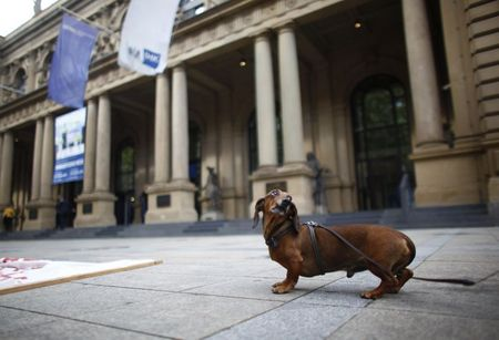 The dachshund of a demonstrator is seen in front of Frankfurt's stock exchange, September 15, 2010. Some hundred people suffering from the bust of the Lehman Brothers two years ago gather in Frankfurt to demonstrate against the financial and banking system. REUTERS/Kai Pfaffenbach (GERMANY - Tags: BUSINESS) CIVIL UNREST)